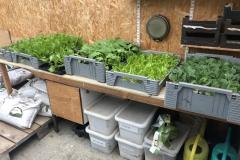 Nieuwe-groenten-plantjes-zijn-binnen