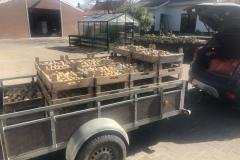 Aardappelen-halen-in-Ouddorp-2